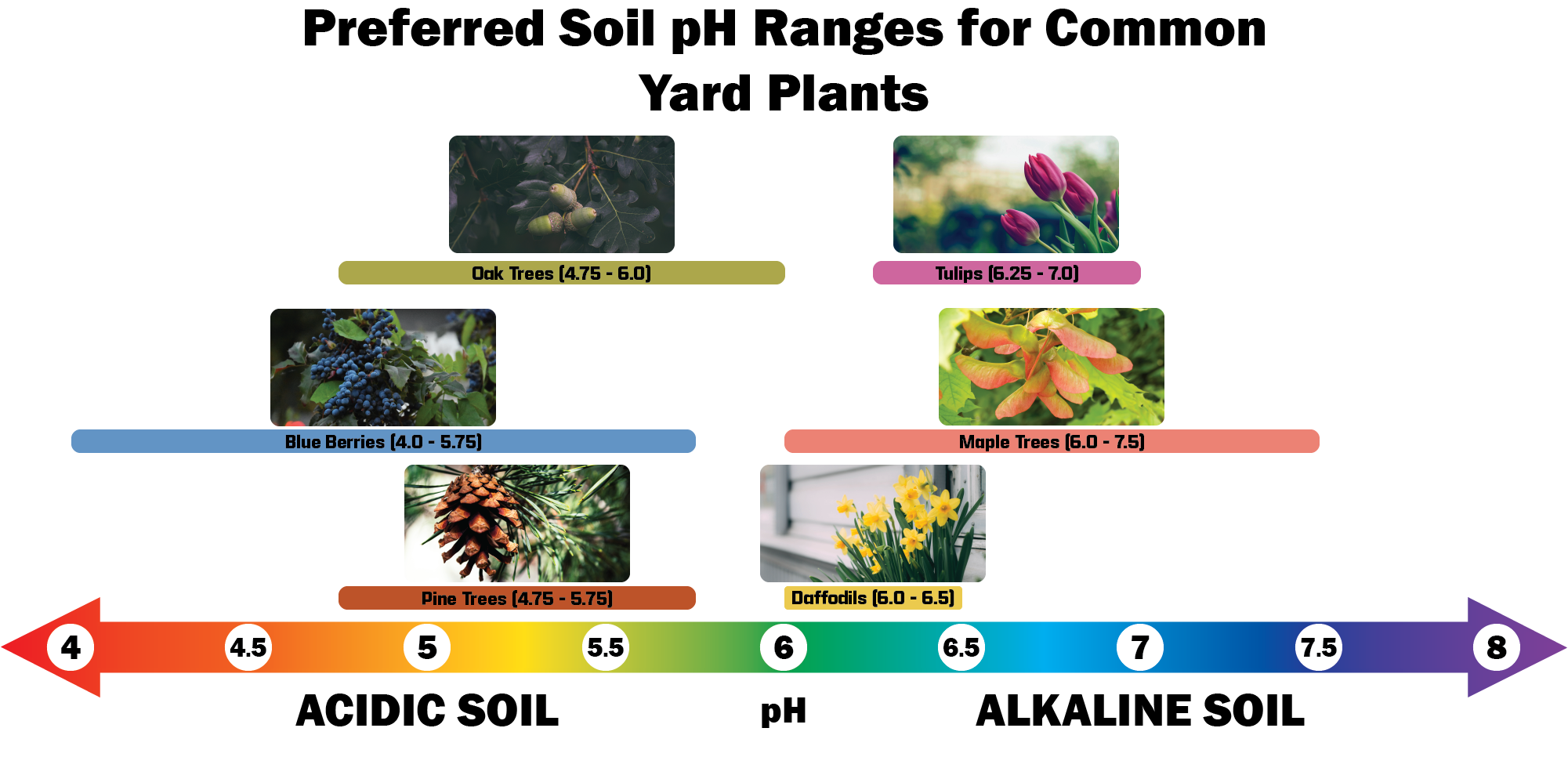 Chart to show pH scale for trees and flowers