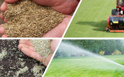 Fall Seeding Your Lawn